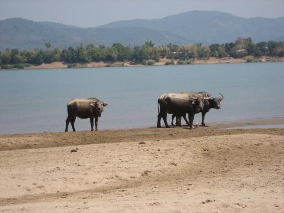 An Island on the Mekong: Don Xai